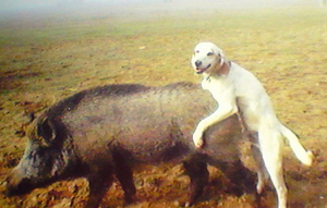 Doghumpinghogdoggystyle